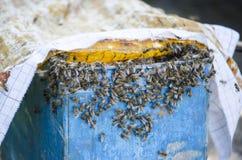 Lo sciame delle api accanto alla prova Trappola della trappola Sciame delle api Immagini Stock