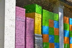 Lo sciame delle api, mosche ai gruppi ha dipinto di recente l'alveare Fotografia Stock Libera da Diritti
