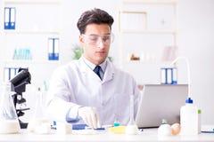 Lo scienziato dell'alimento che prova nuova roba in laboratorio Immagine Stock