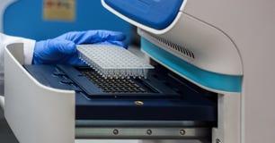 Lo scienziato o il ricercatore o lo studente di phd hanno messo i campioni del DNA nella PCR Fotografia Stock Libera da Diritti
