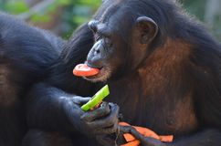 Lo scimpanzé mangia le verdure 2 Fotografie Stock Libere da Diritti