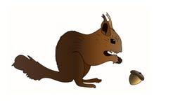 Lo scoiattolo esamina una noce su priorità bassa bianca Fotografia Stock