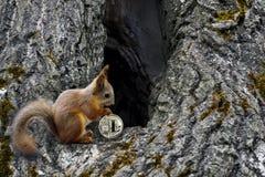 Lo scoiattolo porta conierà il litecoin alla casa nell'albero vuoto fotografie stock libere da diritti