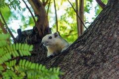 Lo scoiattolo sveglio Immagini Stock Libere da Diritti