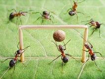 Lo scopo, formiche gioca a calcio Fotografia Stock