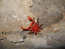 Lo scorpione Fotografia Stock