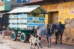 Lo scuolabus è carretto di manzo con gli scolari sulla strada in Vrindavan Fotografia Stock Libera da Diritti