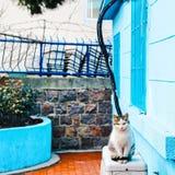 Lo sguardo arrabbiato della natura del gatto nessuna gente sopravvive l'estate di temperatura del colore Fotografia Stock Libera da Diritti