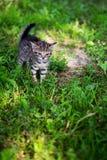 Lo sguardo del gattino spaventa sul prestito Immagini Stock Libere da Diritti