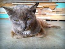 Lo sguardo del gatto Fotografia Stock Libera da Diritti