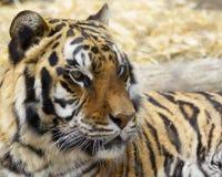 Lo sguardo fisso del monarca immagini stock libere da diritti