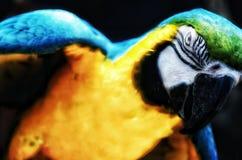 Lo sguardo fisso dell'uccello fotografia stock libera da diritti