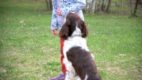 Lo spaniel di imposta della volta della ragazza e del cucciolo di cane del bambino gioca con il frisbee del disco in parco stock footage
