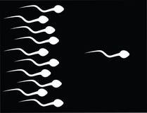 Lo sperma della cattura Immagine Stock