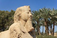 Lo sphinx dell'alabastro di Memphis Immagine Stock Libera da Diritti