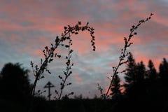 Lo splendore della natura fotografia stock