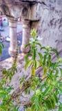 Lo splendore delle piante Fotografia Stock Libera da Diritti