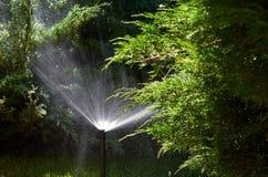 Lo spruzzatore automatico nell'azione, l'acqua del prato inglese del giardino spruzza, innaffiando l'erba fotografia stock libera da diritti