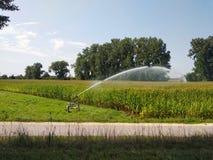 Lo spruzzatore di irrigazione fa l'innaffiatura del mais sul campo agricolo fotografia stock