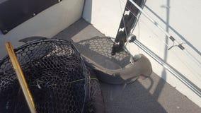 Lo squalo martello ha preso la barca che pesca l'acqua salata immagine stock libera da diritti