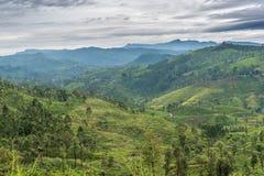 Lo Sri Lanka: campi famosi del tè dell'altopiano del Ceylon Fotografie Stock