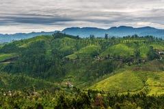 Lo Sri Lanka: campi famosi del tè dell'altopiano del Ceylon Fotografia Stock Libera da Diritti