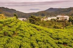 Lo Sri Lanka: campi famosi del tè dell'altopiano del Ceylon Fotografie Stock Libere da Diritti