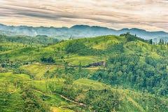 Lo Sri Lanka: campi famosi del tè dell'altopiano del Ceylon Fotografia Stock