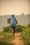 Lo Sri Lanka: collettore del tè con una borsa Immagini Stock Libere da Diritti