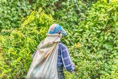 Lo Sri Lanka: collettore del tè con una borsa in piantagione Fotografia Stock Libera da Diritti