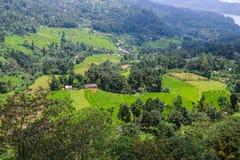 Lo Sri Lanka. Nuwara Eliya. Fotografia Stock Libera da Diritti