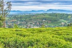 Lo Sri Lanka: piantagioni di tè dell'altopiano in Nuwara Eliya Immagine Stock Libera da Diritti
