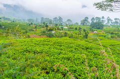 Lo Sri Lanka verde Fotografia Stock