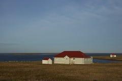 Lo stabilimento sull'isola più brulla - Falkland Islands Immagini Stock