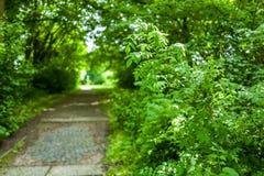Lo Stadtpark in Wilhelmshaven, Germania fotografia stock
