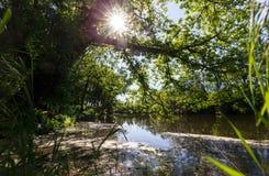 Lo stagno del lago forest è invaso con erba verde e gli alberi fertili al sole Immagini Stock