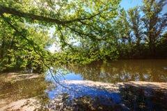 Lo stagno del lago forest è invaso con erba verde e gli alberi fertili al sole Immagine Stock Libera da Diritti