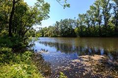 Lo stagno del lago forest è invaso con erba verde e gli alberi fertili al sole Fotografia Stock