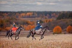 Lo stallone nero Fotografia Stock Libera da Diritti