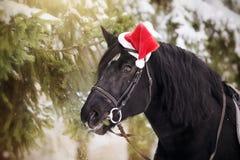 Lo stallone in un cappello di Santa Claus di rosso mangia i rami dell'abete Fotografie Stock