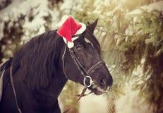 Lo stallone in un cappello di Santa Claus di rosso mangia i rami dell'abete Immagini Stock