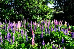 Lo steepe Altaya di Flowerses Immagini Stock