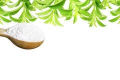 Lo stevia rebaudiana e la polvere verdi freschi dell'estratto in cucchiaio di legno con testo copiano lo spazio su fondo bianco Immagini Stock Libere da Diritti