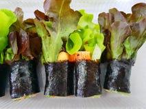 Lo stile tailandese dell'alimento, vista superiore ha rotolato l'insalata di verdure idroponica fotografie stock libere da diritti