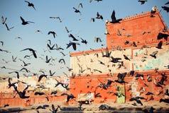 Lo stormo degli uccelli decolla nel cielo contro un fondo di costruzione antica in India Fotografia Stock