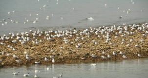 lo stormo 4k dei gabbiani sorvola l'oceano e tira di giorno, appollaiato sulla spiaggia video d archivio