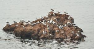 lo stormo 4k dei gabbiani sorvola l'oceano e tira di giorno, appollaiato sulla spiaggia stock footage