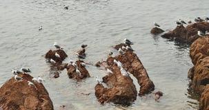 lo stormo 4k dei gabbiani sorvola l'oceano e tira di giorno, appollaiato sulla spiaggia archivi video