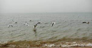 lo stormo 4k dei gabbiani sorvola l'oceano ed appollaiati sulla spiaggia di giorno video d archivio