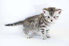 Lo strabismo, è strabico il gattino osservato Fotografie Stock Libere da Diritti
